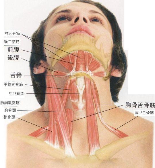 が 喉 痛い 左側 の